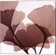 Ginko Leaves I Fine-Art Print