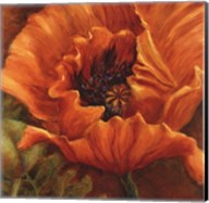 Orange Poppy Fine-Art Print