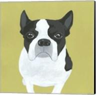 Miss Pickles Fine-Art Print