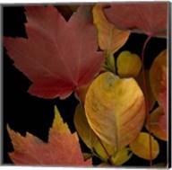 Small Vivid Leaves IV (ST) Fine-Art Print