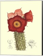 Flowering Cactus II Fine-Art Print