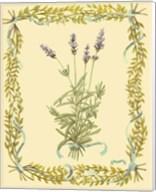 Small Lavender Fine-Art Print