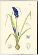 Spring Bounty IV Fine-Art Print