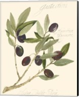 Gaeta Olives Fine-Art Print