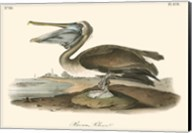 Brown Pelican Fine-Art Print