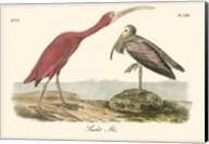 Scarlet Ibis Fine-Art Print