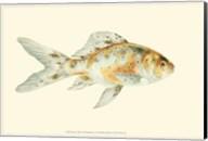 Speckled Goldfish Fine-Art Print