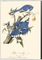 Audubon Blue Jays Fine-Art Print