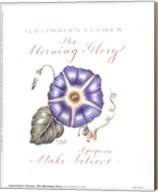 September's Flower, Morning Glory Fine-Art Print