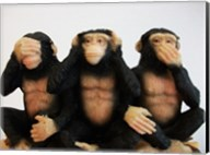 Monkeys - See No Evil, Hear No Evil, Speak No Evil Fine-Art Print