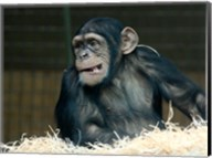 Funny Monkey Fine-Art Print