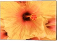 Hibiscus Cluster I Fine-Art Print