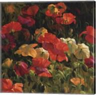 Iceland Poppies Fine-Art Print