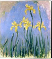 The Yellow Irises, c.1918-25 Fine-Art Print