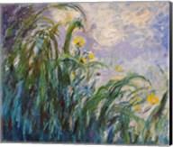 The Yellow Iris Fine-Art Print