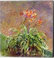 Hemerocallis, 1914-17 Fine-Art Print
