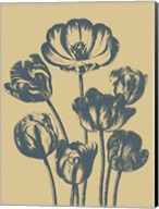 Tulip 1 Fine-Art Print