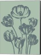 Tulip 8 Fine-Art Print