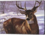 Through My Window- Whitetail Deer Fine-Art Print