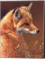 Curious- Red Fox Fine-Art Print