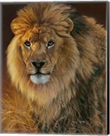 Power and Presence- African Lion Fine-Art Print