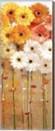 Daisies Fall I Fine-Art Print