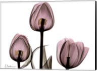 Trio of Tulips II Fine-Art Print