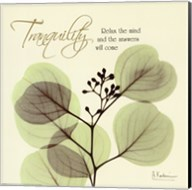 Tranquility Eucalyptus Fine-Art Print