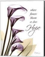 Blackberry Calla Lilies, Hope Fine-Art Print