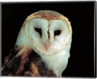 Barn Owl Portrait Fine-Art Print