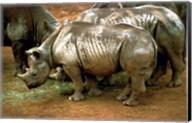 Black Rhinoceros in Africa Fine-Art Print