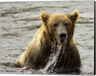 Brown Bear Fishing Fine-Art Print