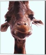 Giraffe Face Fine-Art Print