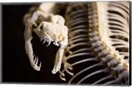 Snake Skeleton Fine-Art Print
