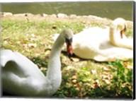 Swans by the Lake Fine-Art Print