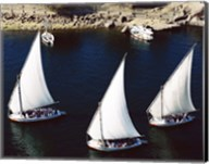 Sailboats in a river, Nile River, Aswan, Egypt Fine-Art Print