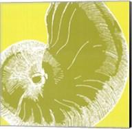 Graphic Shell II Fine-Art Print