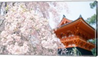 Cherry Blossom tree in front of a temple, Kyoto, Honshu, Japan Fine-Art Print