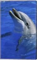 Dolphin Sea World San Diego California USA Fine-Art Print