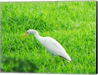 Egret In Field Fine-Art Print
