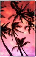 Kauai Hawaii Palm Tree Silhouette Sunset Fine-Art Print