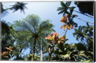 Low angle view of palm trees, Hawaii Tropical Botanical Garden, Hawaii, USA Fine-Art Print
