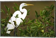 Close-up of a Great Egret Perching on a Branch Fine-Art Print