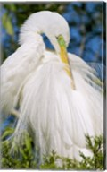 Great Egret - photo Fine-Art Print