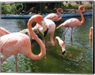Flamingos in a Zoo Fine-Art Print