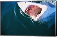 Great White Shark Biting Fine-Art Print