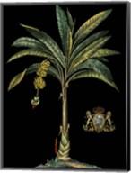 Palm & Crest on Black I Fine-Art Print
