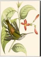 Delicate Hummingbird Fine-Art Print