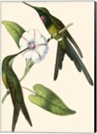 Delicate Hummingbird III Fine-Art Print