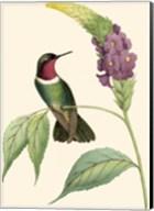 Delicate Hummingbird IV Fine-Art Print